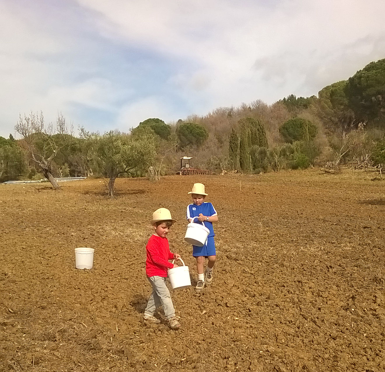 Amata grass sowing