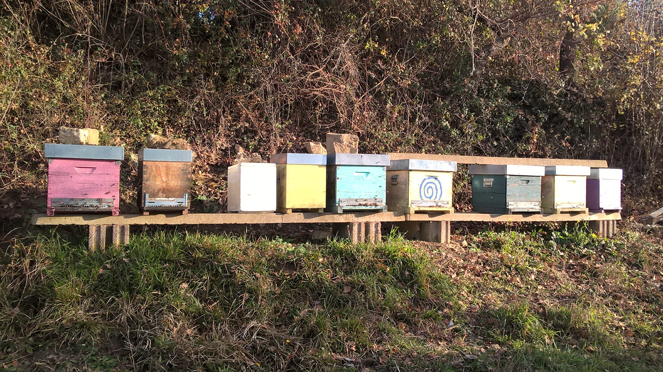 Amata Bees in winter